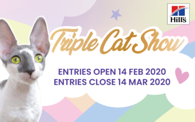 KZNCC Triple Cat Show Entries Now Open